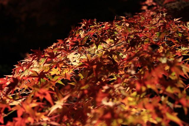 20141122-武奈ヶ岳&京都ライトアップ-0641.jpg