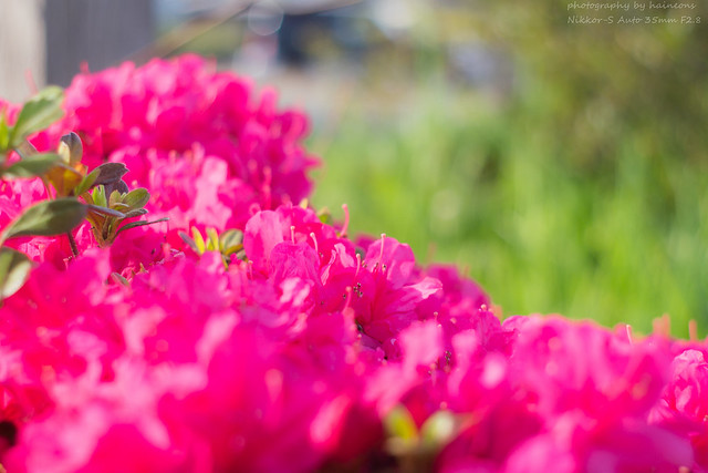 04/26 flower photography