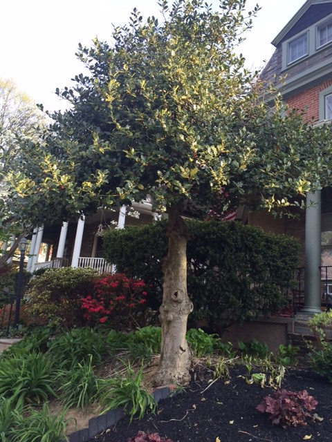 Re-Tree Chestnut Hill Tree Photo Contest Spring 2016