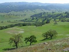 The hidden green valley