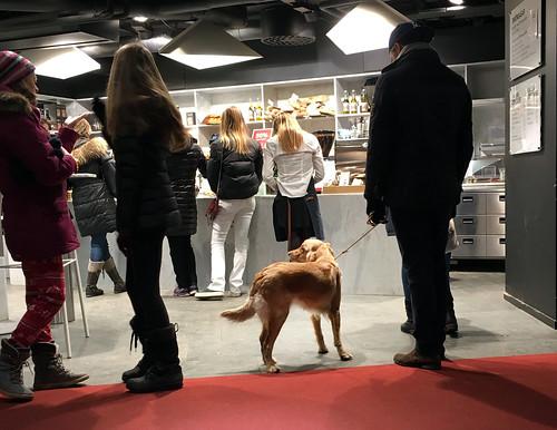 sverigexmas-dogstockholmIMG_2407