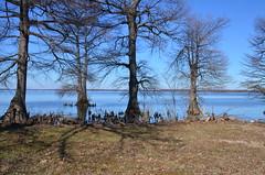Reelfoot Lake