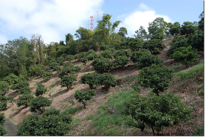 果園望粽子坑山