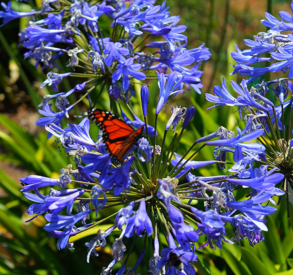 #Butterfly #Schmetterling #Madeira #Funchal