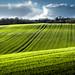 Green fields by daniel_munch