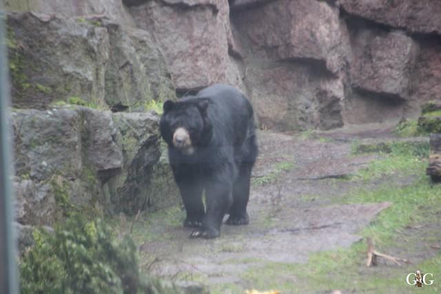 Besuch Tierpark Friedrichsfelde 14.02.20161