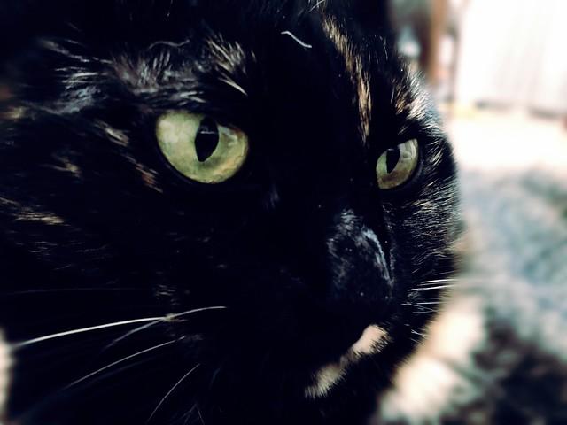 キリッ•̀.̫•́✧ #cat #cats #catsofinstagram #catstagram #instacat #instagramcats #neko #nekostagram #猫 #ねこ #ネコ ネコ部 #猫部 #ぬこ #にゃんこ #ふわもこ部