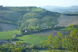 Italy (Dozza) Vineyards and wineries
