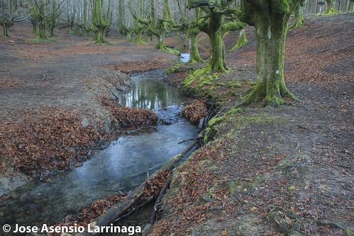 Parque Natural de Gorbeia  #DePaseoConLarri #Flickr -3044