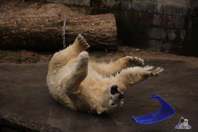 Eisbär Fiete im Zoo Rostock 13.03.2016 Teil 2  066
