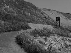 Davenport Beach Trail