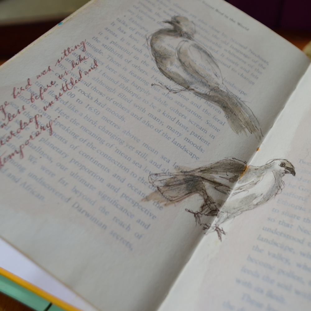 the bird book