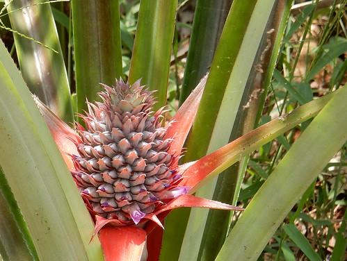 Quintana Roo NP campground - bloem