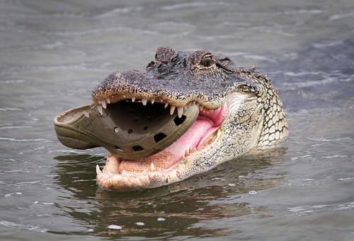 croc17n-1-web