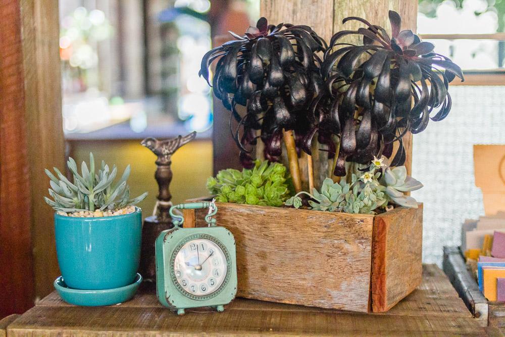 the grounds of alexandria succulents visual merchandising