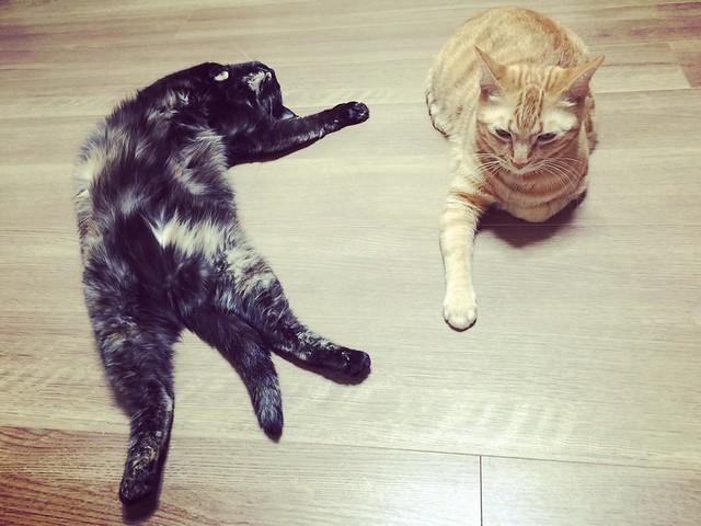 仰向けで爆睡(>_<) #cat #cats #catsofinstagram #catstagram #instacat #instagramcats #neko #nekostagram #猫 #ねこ #ネコ# #ネコ部 #猫部 #ぬこ #にゃんこ #ふわもこ部