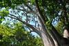 Jardin botanique national de Kirstenbosch