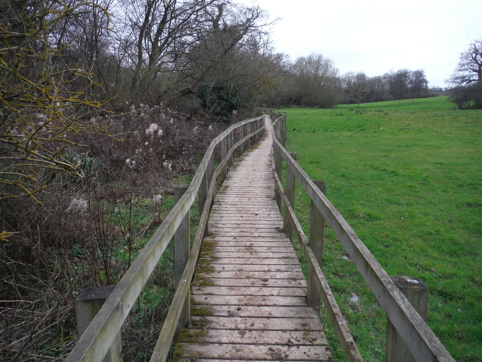 Boardwalk, Spittal Brook Valley SWC Walk 168 Broxbourne Circular