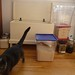 Pantry Maintenance Assistant