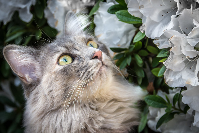 Admiring the Flowers