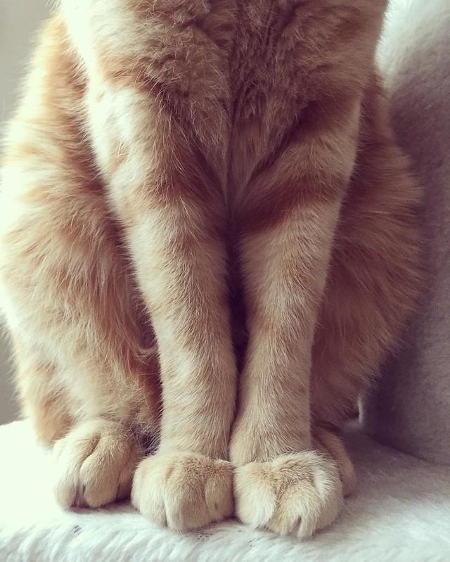 セクシーショット(≧∇≦)💘 #cat #cats #catsofinstagram #catstagram #instacat #instagramcats #neko #nekostagram #猫 #ねこ #ネコ# #ネコ部 #猫部 #ぬこ #にゃんこ #フワモコ部