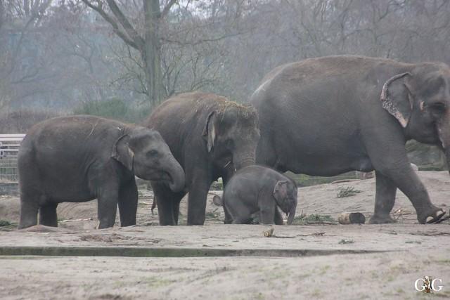 Besuch Tierpark Friedrichsfelde 14.02.201660