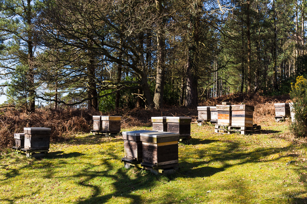 The bees were busy at the apiary