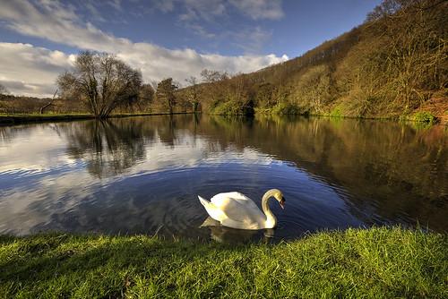 lake canon swan llangammarchwells valeboy cliverees