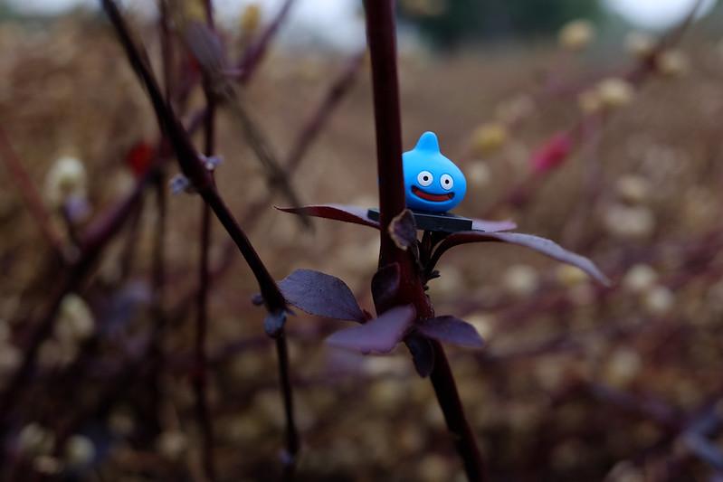 Chiayi story|富士 Fujifilm X70 28mm f/2.8