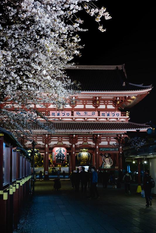 宝蔵門と桜