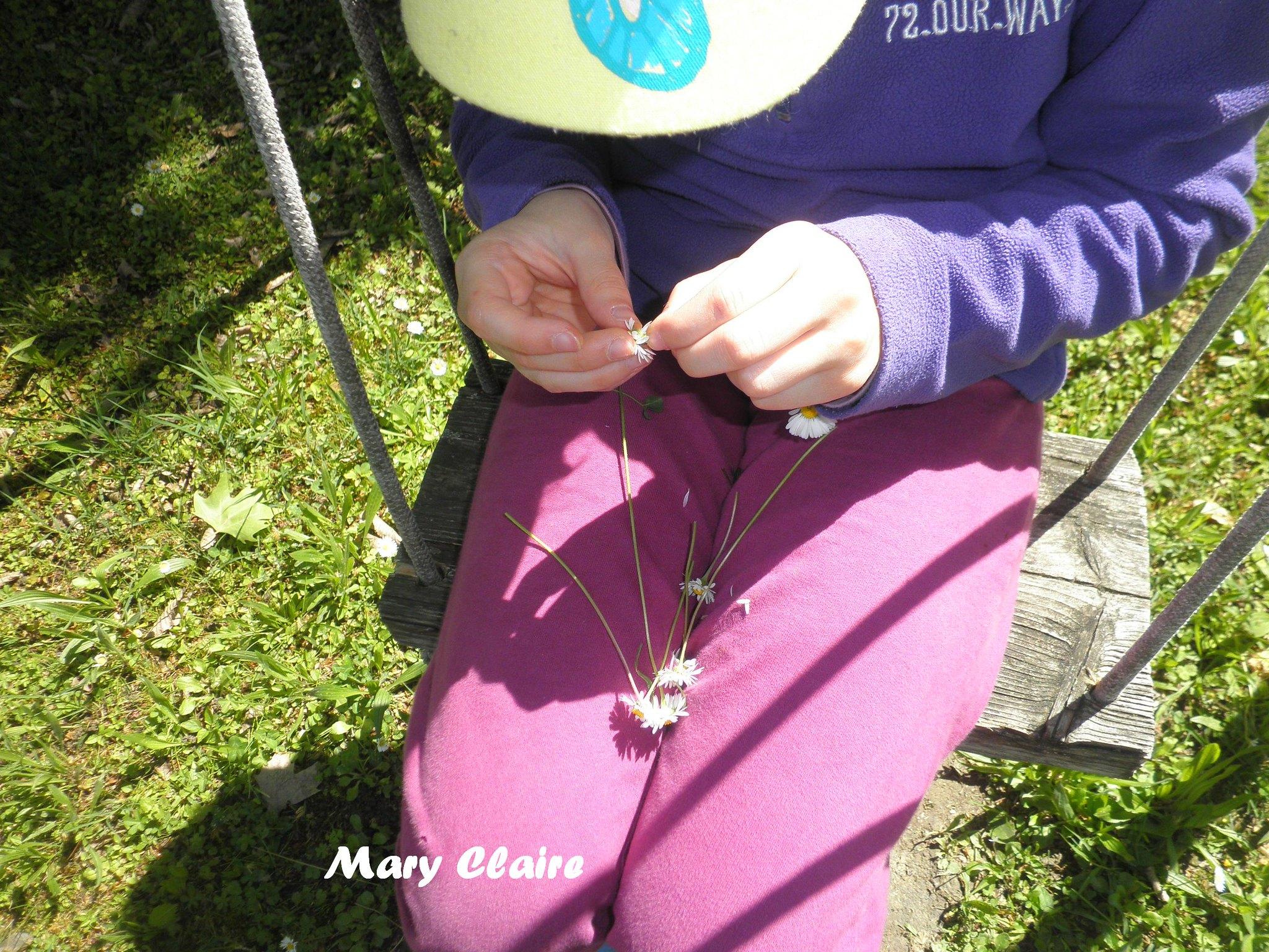 preparazione anello di margherite