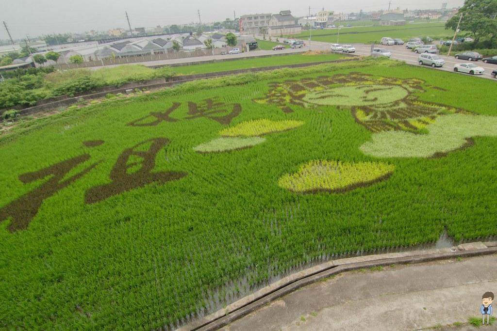 苑裡彩繪稻田 (2)