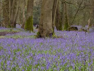 Staffhurst Wood