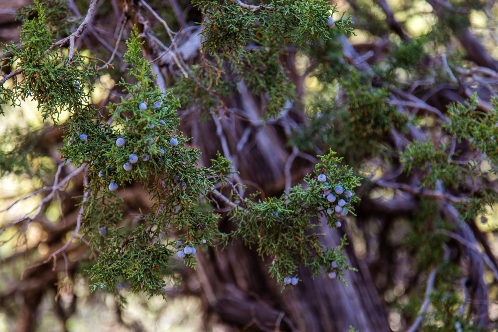 Mesa Verde-7185