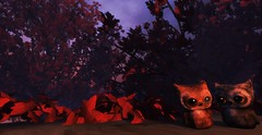 Critter Adventures in the Fairelands: Owls in Malfience