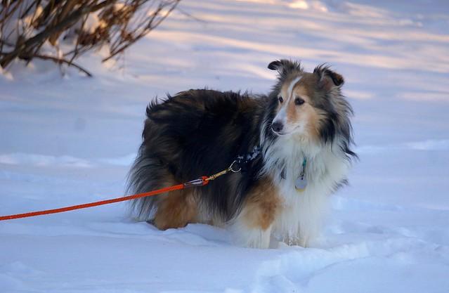 Foster dog, Maggie