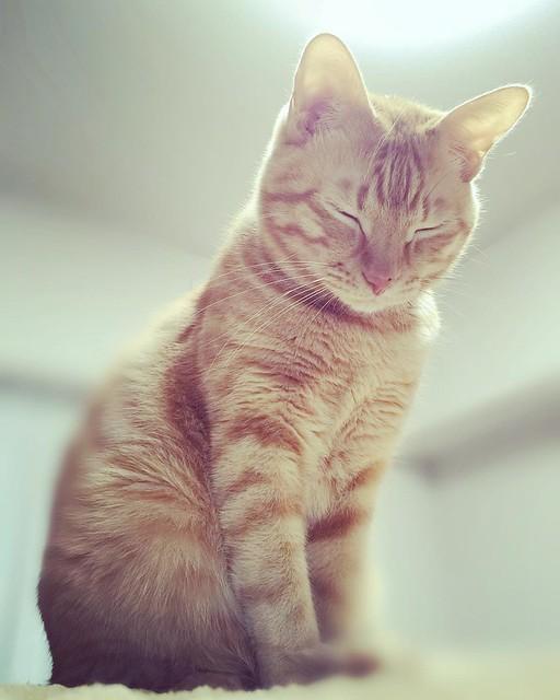 #cat #猫 #ねこ 眠い😴😴😴