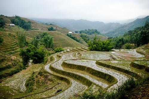 Die Reisfelder von Sapa