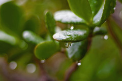 :sparkling_heart::sparkling_heart: Greetings from a very wet San Diego  :sparkling_heart::sparkling_heart: