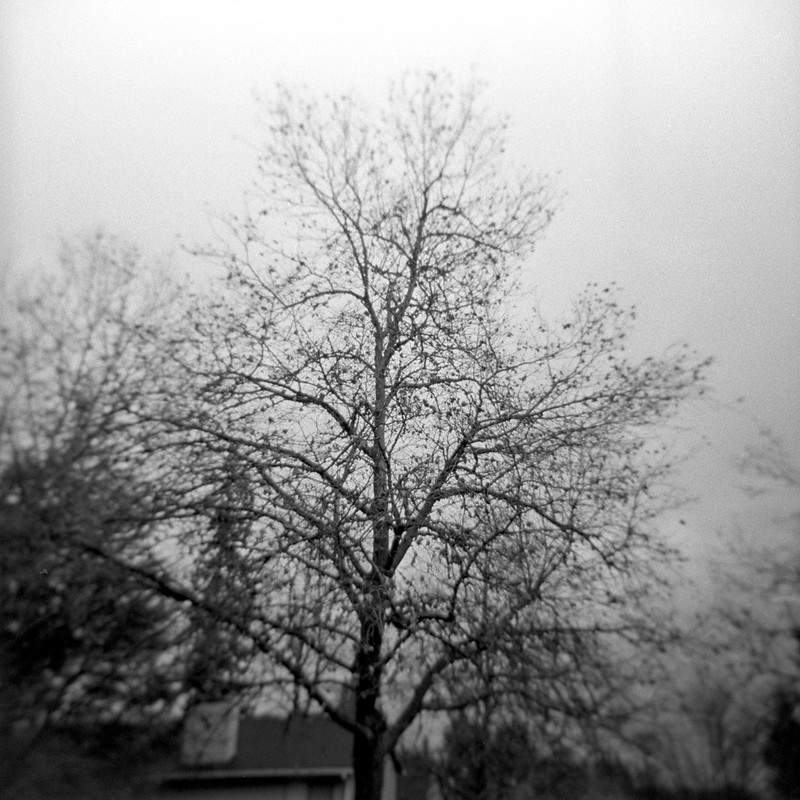 The tree in the front yard