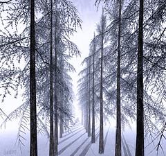 .. winter's lifeless world ..