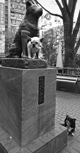 忠犬 loyal dogs (ii)
