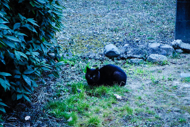 Today's Cat@2016-02-29