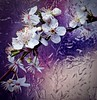 Blossom (Explored 11/02/16)