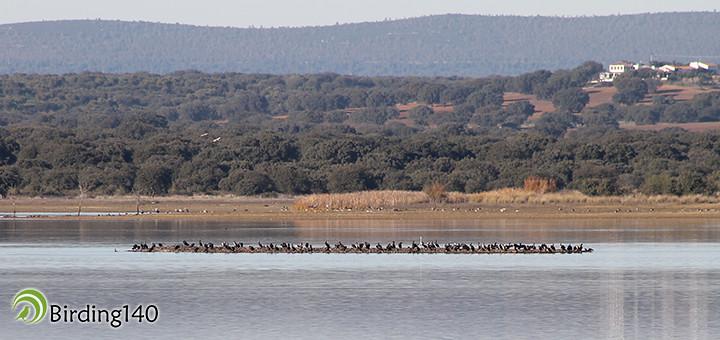 Isla de los cormoranes