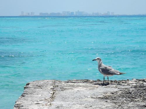Isla Mujeres - meeuw kijkt naar skyline Cancun