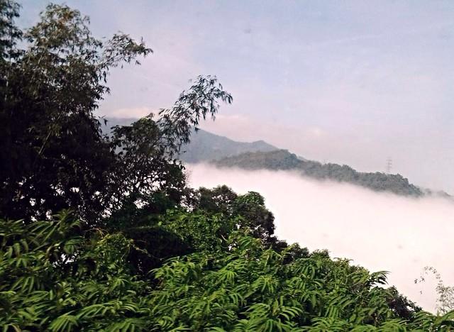在鹿谷難得一見的雲海 (2)