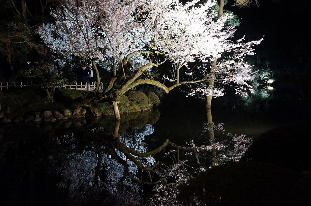 "Cherry tree of ""KENROKU"" gardens"