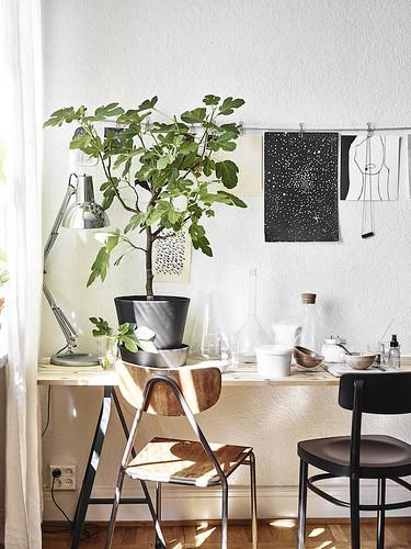 01-decoracion-con-plantas-ikea-sostenible