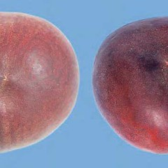 peaches-0085